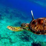 一生モノの旅路    〜グレートバリアリーフ 神秘の海中に迫る〜【ウミガメに遭遇!動画あり】